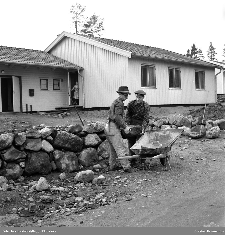 Bröderna Kjell och Lloyd Pettersson i arbete på sina tomter. De bor grannar i nya SCA-subventionerade villor. Bildsviten visar exteriörer samt interiörer med familjerna. LLoyd Pettersson flyttade in på Vattugatan 7 och Kjell Pettersson på Vattugatan 5. Bägge var anställda på Ortvikens pappersbruk. Området kom att kallas Sibirien i folkmun.