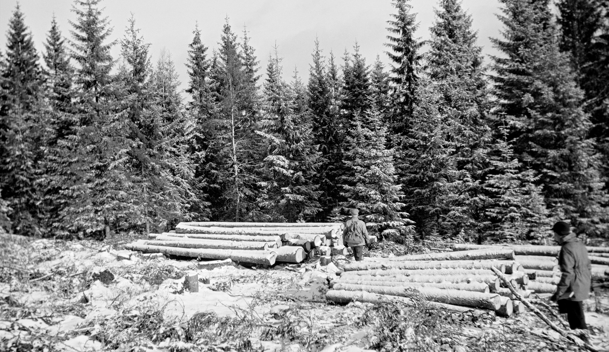 Fra Bjørnebråtskogen i Ski i Akershus.  Dette fotografiet er tatt en februardag i 1943 på ei lita flate i granskogen, der alle trærne var avvirket foregående sommer.  En del ubarket tømmer var samlet i to lunner i utkanten av flata, antakelig i påvente av at det skulle komme såpass med snø at det ble mulig å hente stokkene på hestesleder.  Da dette fotografiet ble tatt var snølaget for tynt, sleden ville ha møtt for mye motstand fra kvist og stubber.  To menn inspiserte tømmerlunnene da dette fotografiet ble tatt.  Navnet «Th. Johannson» er knyttet til dette motivet.  Dette kan ha vært mannen sentralt i bildet, med ryggsekk.