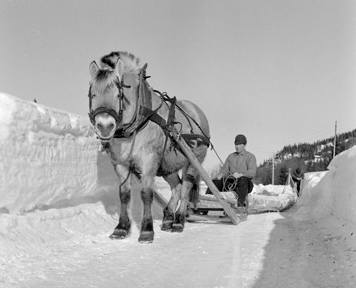 Hankekjøring av tømmer i Vestre Gausdal i Oppland vinteren 1967.  Fotografiet er tatt på et tidspunkt da hankevendinga var kommet ned den bratte lia og befant seg på en offentlig veg.  Hesten sto stille mellom høge brøytekanter, mens kjørekaren Reidar Solberg satt på stuttingen med tømmene i hendene.  Bak ham var det en lang kjede av tømmerstokker.  Det var en fjording med arbeidssele som dro lasset.  Solberg var kledd i vadmelsbukser og busserull.  Han hadde hatt på hodet, men brukte ikke votter denne solrike seinvinterdagen.  Fotografiet er tatt i forbindelse med opptakene til en dokumentarfilm.  I bakgrunnen skimter vi fotografen Kjell Søgård med kamerastativ.  Han gjorde seg antakelig klar for å filme hankevendinga bakfra idet den ble kjørt dn siste bakkekneika ned mot velteplassen.