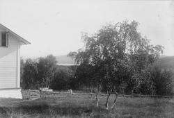 Hagen på doktorgården Solheim, Kirkenes, før 1897.