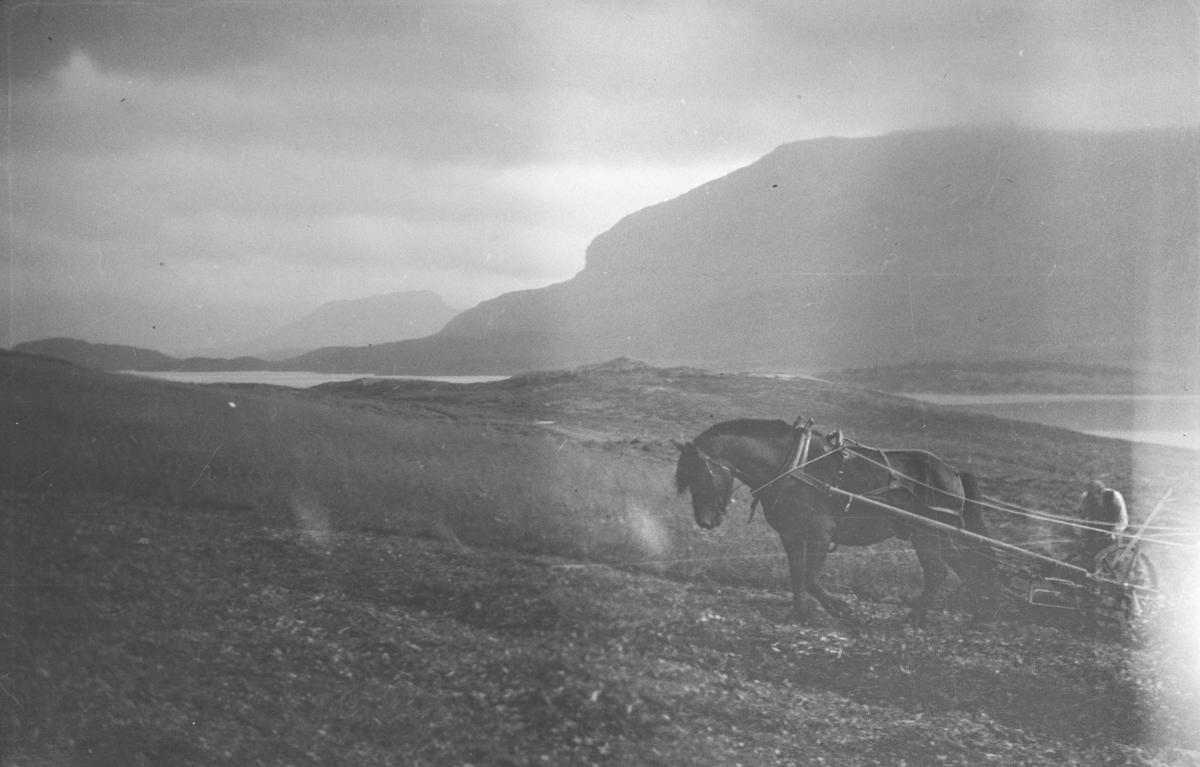 Ved Bessheim og Øvre Sjodalsvatnet, mann med hest arbeider på jordet.