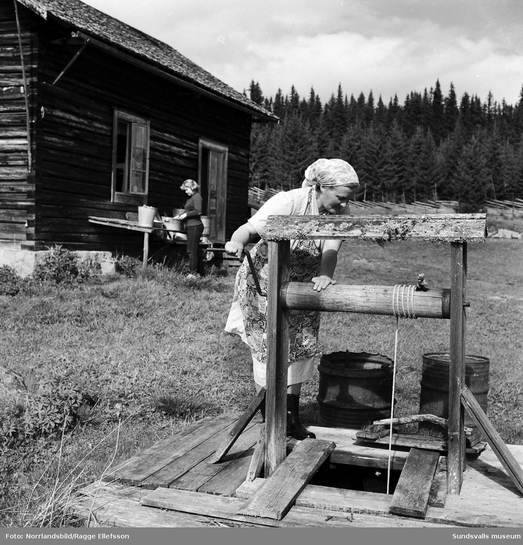 Hammerdals turistförening visar verksamhet på en fäbod.