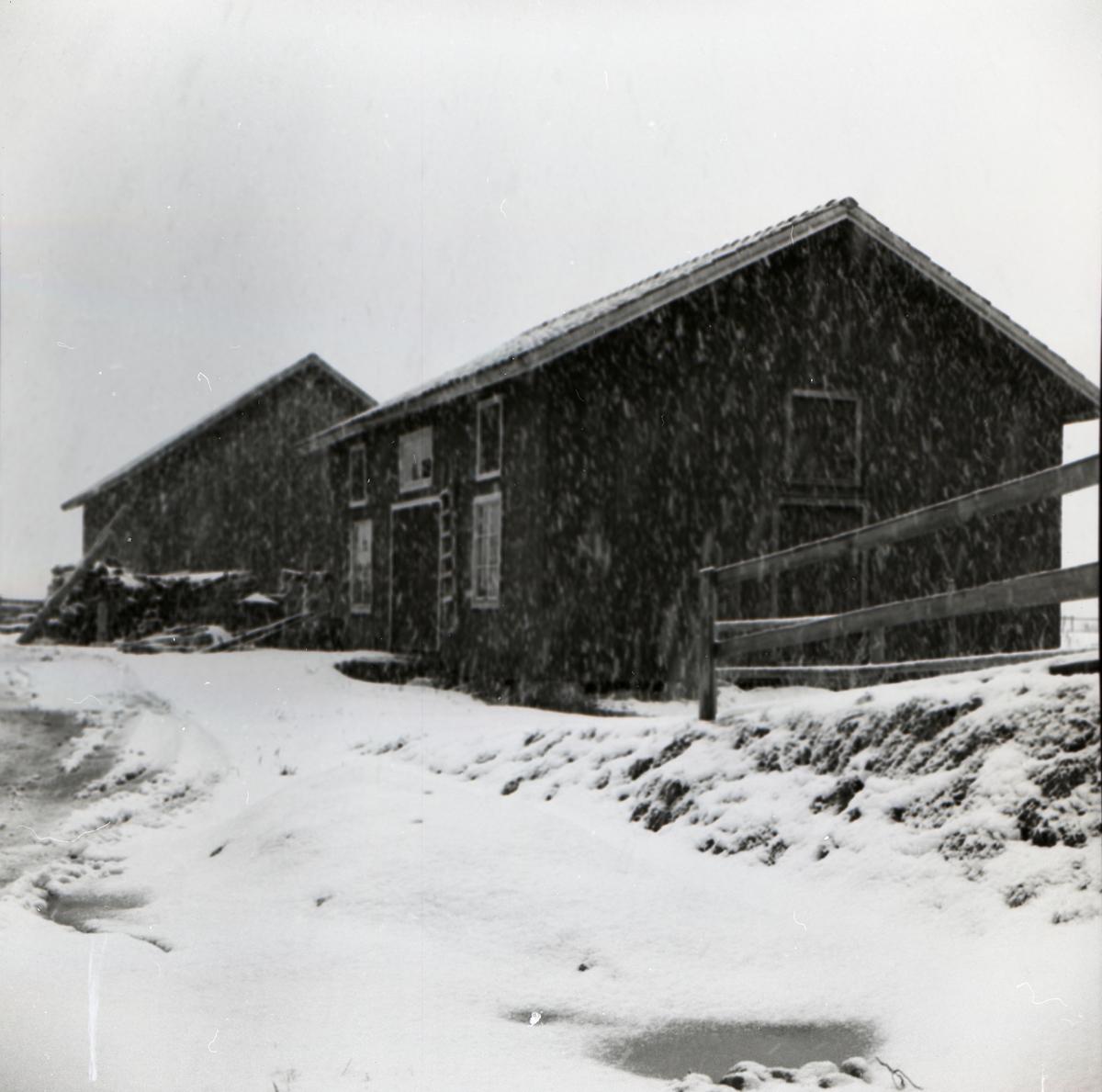 Snöfall vid två byggnader, varav den ena är ett slakteri, i december 1955.