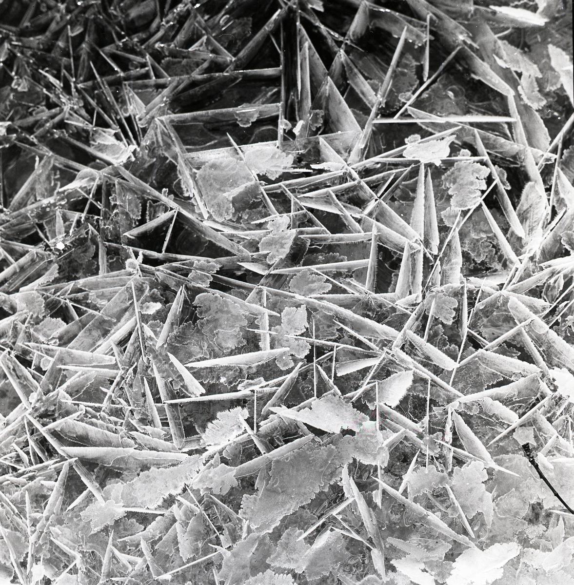 Flakig is bildar spetsiga mönster, 5 december 1958.