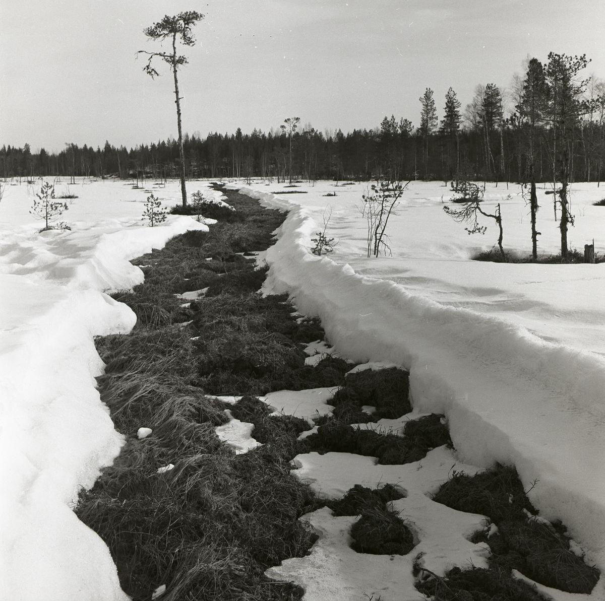 En snöfri väg över en snötäckt myr, 6 april 1960.