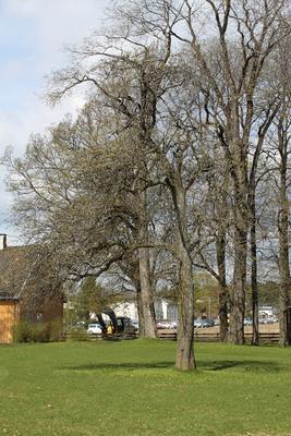 Pæretreet foran i bildet er den eneste nytteveksten som er bevart fra fattiggårdsperioden, da deler av hageanlegget var anlagt som nyttehage.