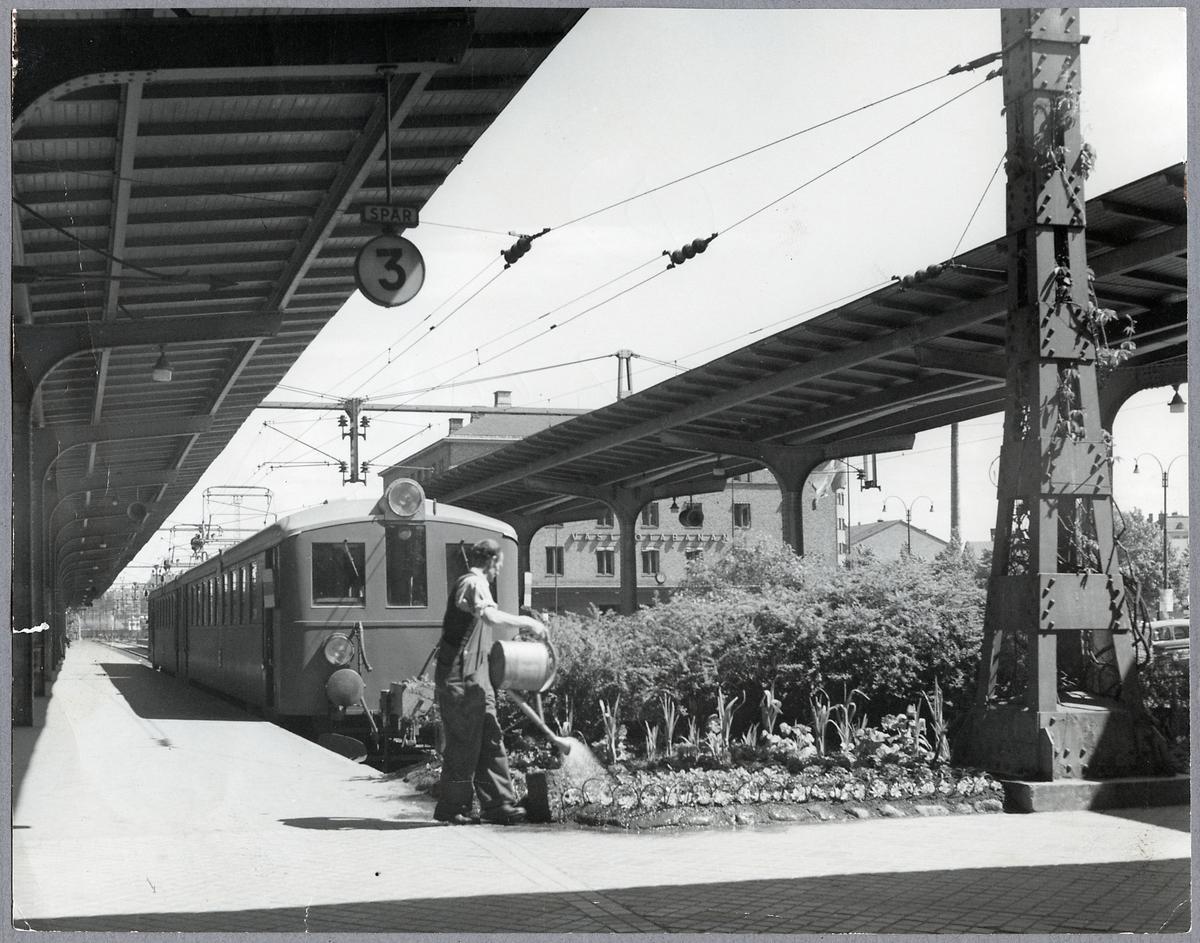 Göteborgs centralstation, spår 3. Planteringsskötsel