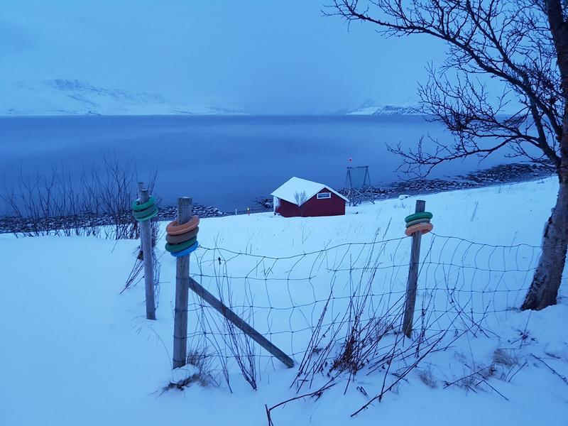 Hos Marion Palmer i Kvalsundet. (Foto/Photo)