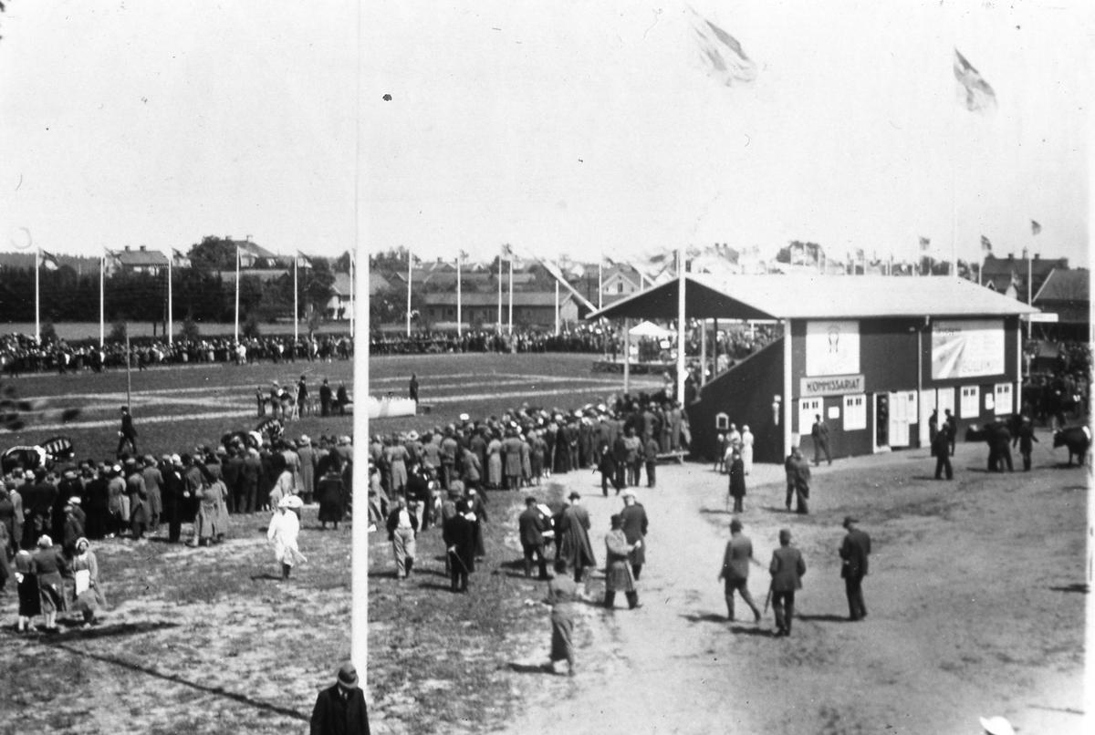 Lantbruksutställningen pågår under tre dagar, som ett inslag i Arbogautställningen. En stor publik är samlad. Två hästar ses på Sturevallen. En ko skymtar till höger i bild. I läktarbyggnaden finns kommissariatet.