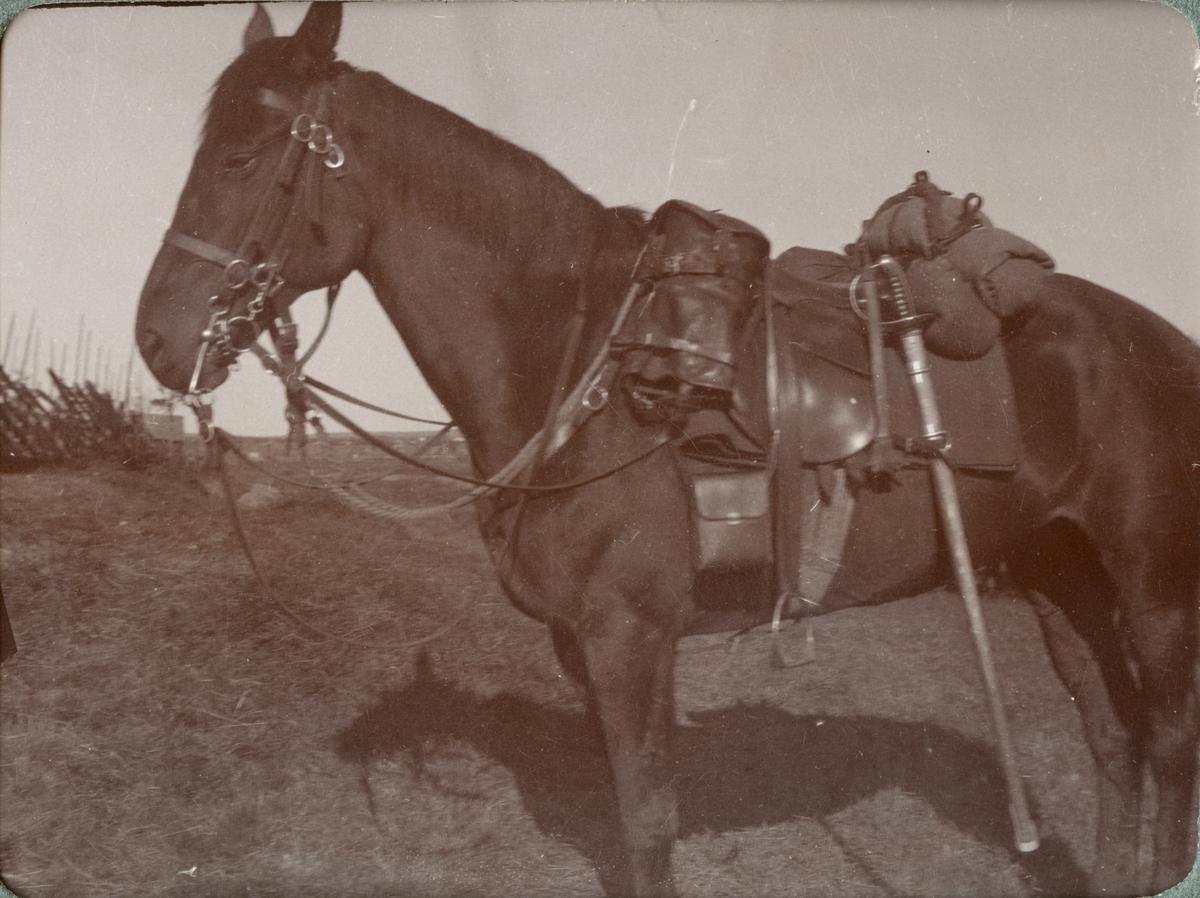 Häst från Kronprinsens husarregemente K 7.
