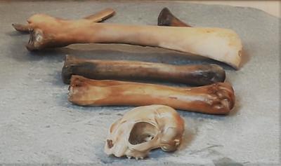 Et knippe utvalg av skjeletter funnet i forbindelse med arkeologisk utgravning B8a på Sørenga i Oslo
