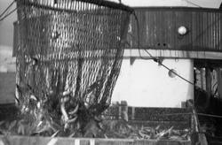 Serie på 10 bilder fra et fiskefelt, trolig sildefiske med n