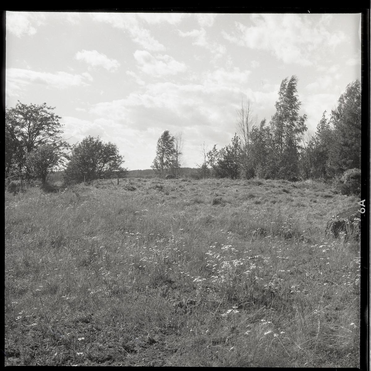 """Munktorp sn, Köping, Åsby. """"Hummelbacken"""". Utgrävning av gravfält RAÄ 117. Gravfältet från sydost, översiktsbild. 1961."""
