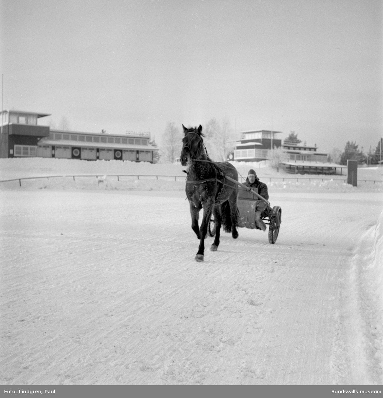 Travhäst och kusk på travbanan i Bergsåker. Aktiebolaget Trav och Galopp ATG.