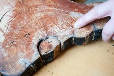 Bildet viser forskning på brent tre. Foto/Photo