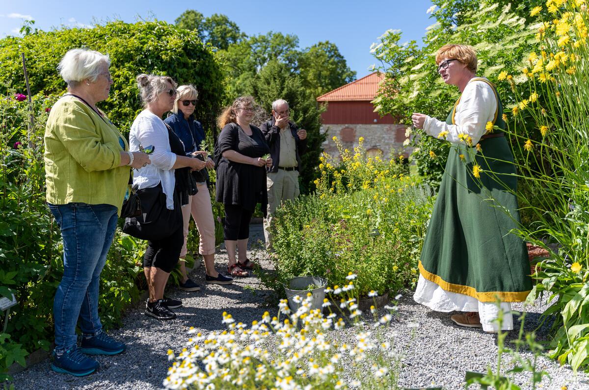 Formidling i urtehagen på Anno Domkirkeodden. (Foto/Photo)