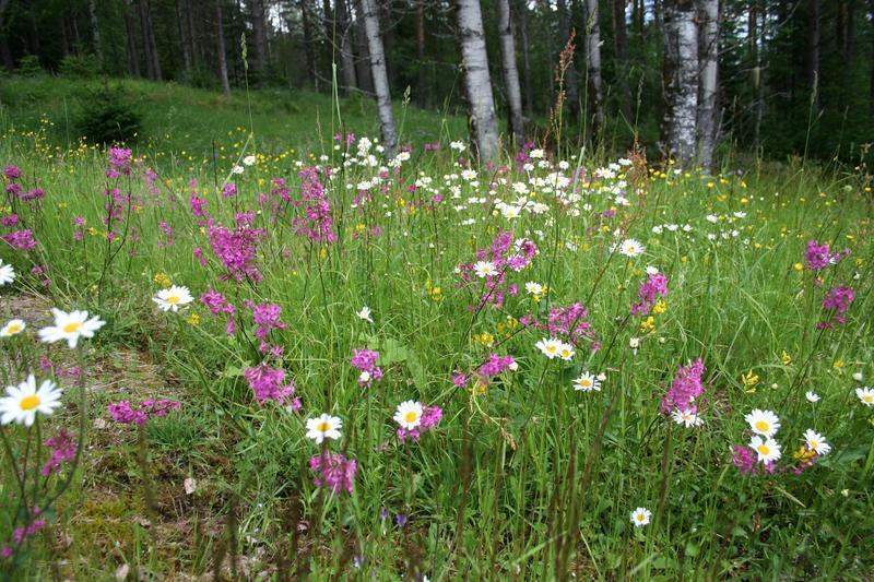La områder i hagen din gro fritt! (Foto/Photo)
