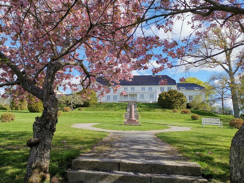 Bildet viser Rød Herregård sett fra sørlig retting. Huset er en stor, symmetrisk, hvit tømmerbygning med sort tak. Foran huset sees en liten monolitt, samt hagestien som går rundt den og leder ned mot trappetrinn i forgrunnen av bildet. I forgrunnen  sees to japanske kirsebærtrær i blomst med rosa blomster.