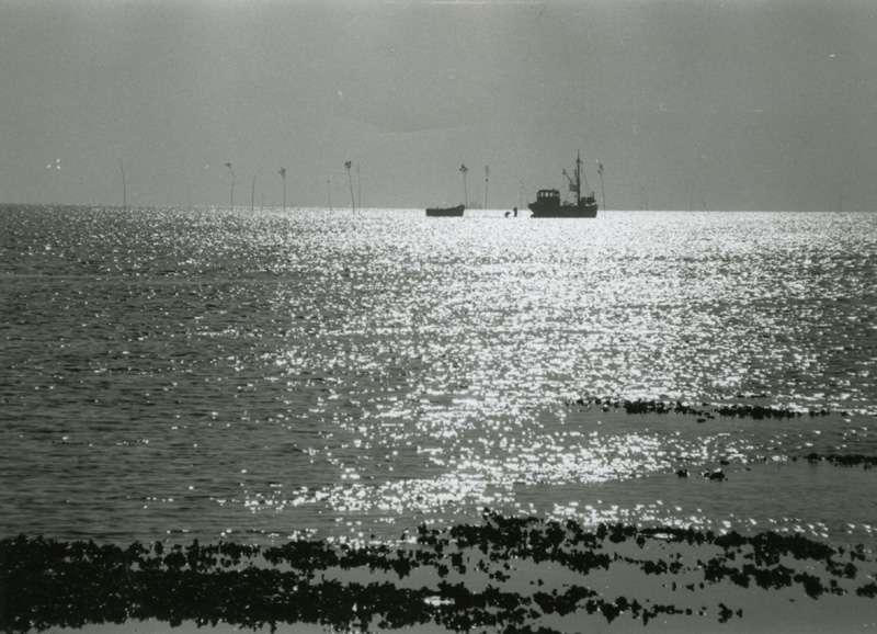Avstandsbilde av båtar på østersoppdrett