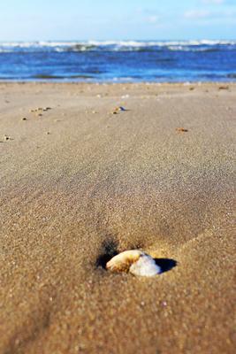 Brun sandstrand med et skjell i forgrunnen, blått hav og blå himmel i bakgrunnen.. Foto/Photo