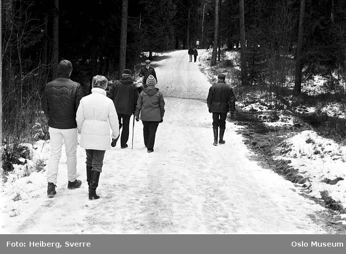 skogsvei, mennesker, tur