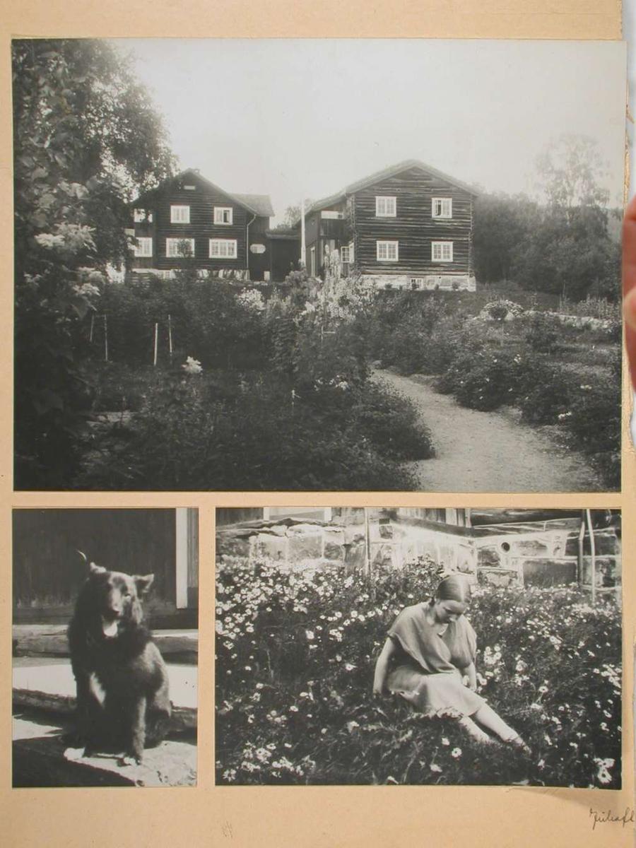 To bilder av Bjerkebæk, et sommerbilde og et vinterbilde. To bilder av Maren Charlotte i haven. To bilder av hunder.