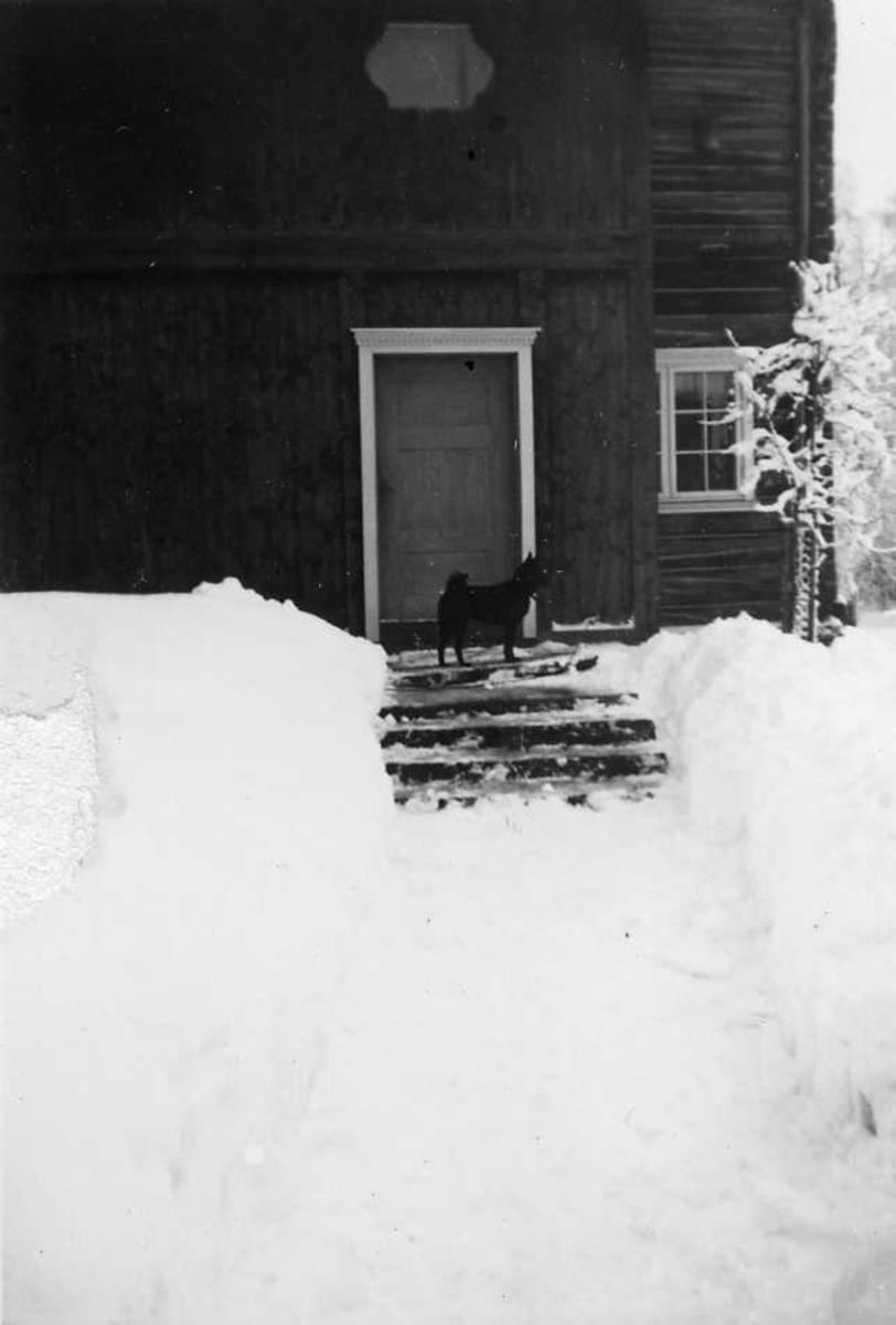 Hund, snø, trapp
