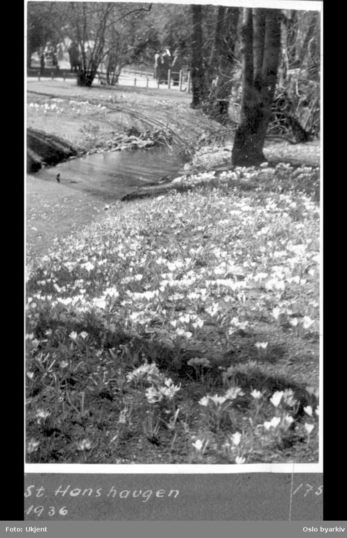 Bekk i parken med blomstrende krokus.