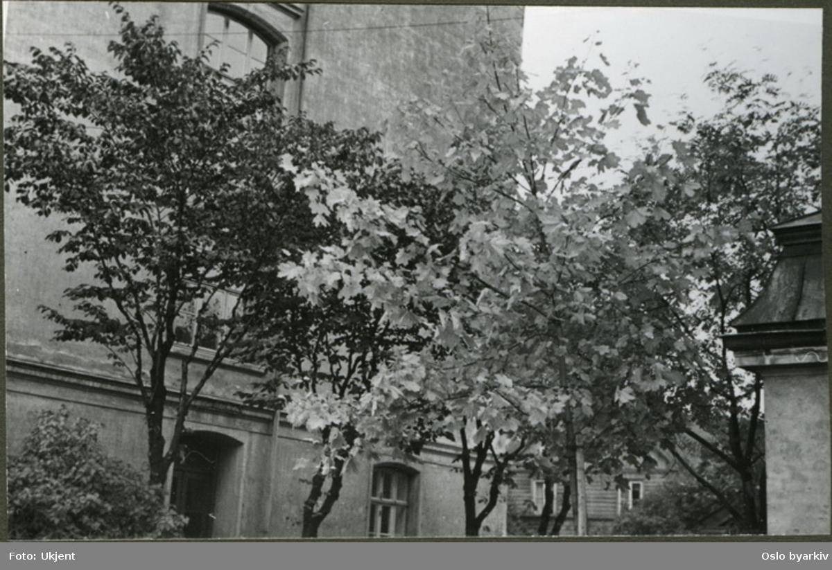 """Trær i skolegården. Albumtittel: """"Sofienberg skole femti år - første september 1933."""""""