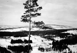 """Utsikt, landskap, Jessnes, Furnes.  utsikt fra hoppbakken """"T"""