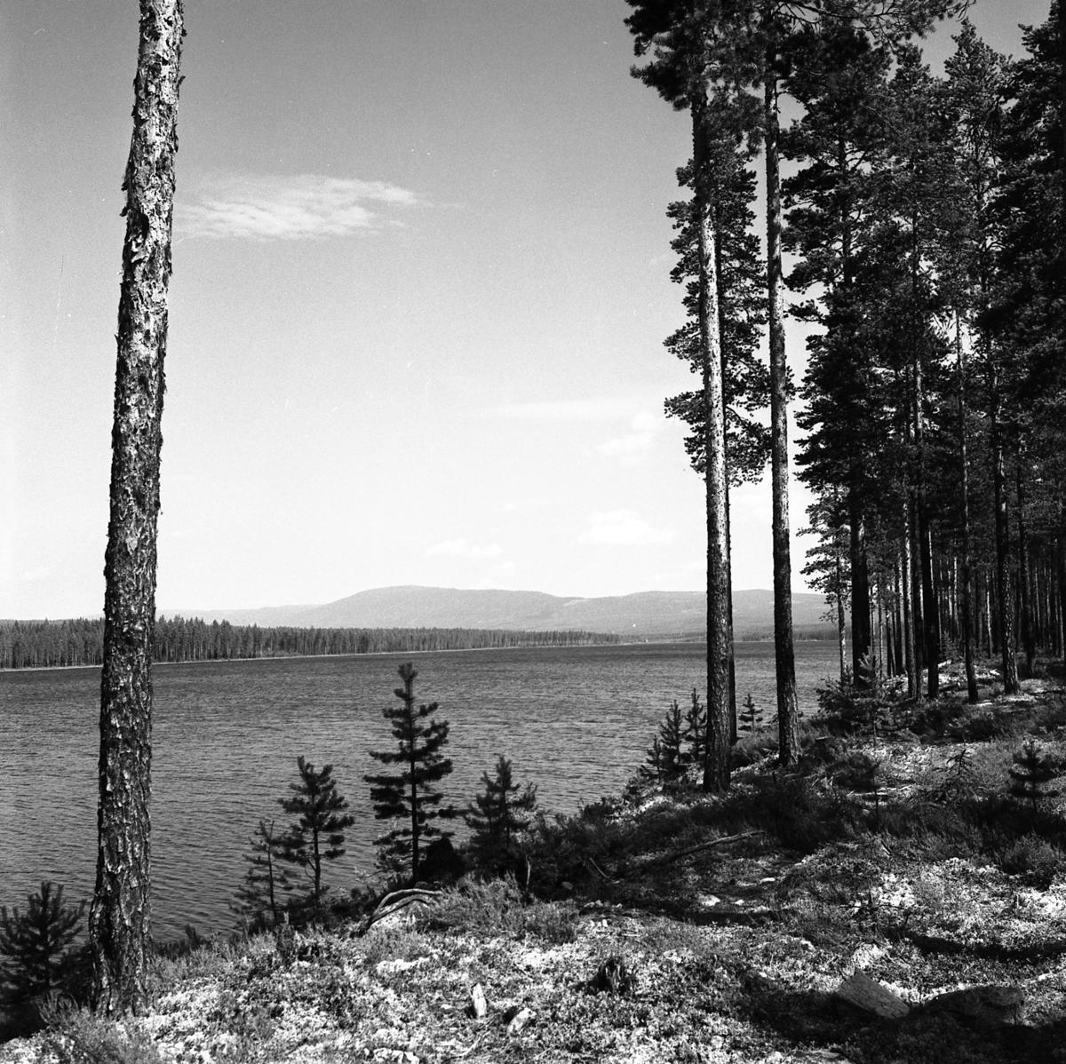 Løpsjøen
