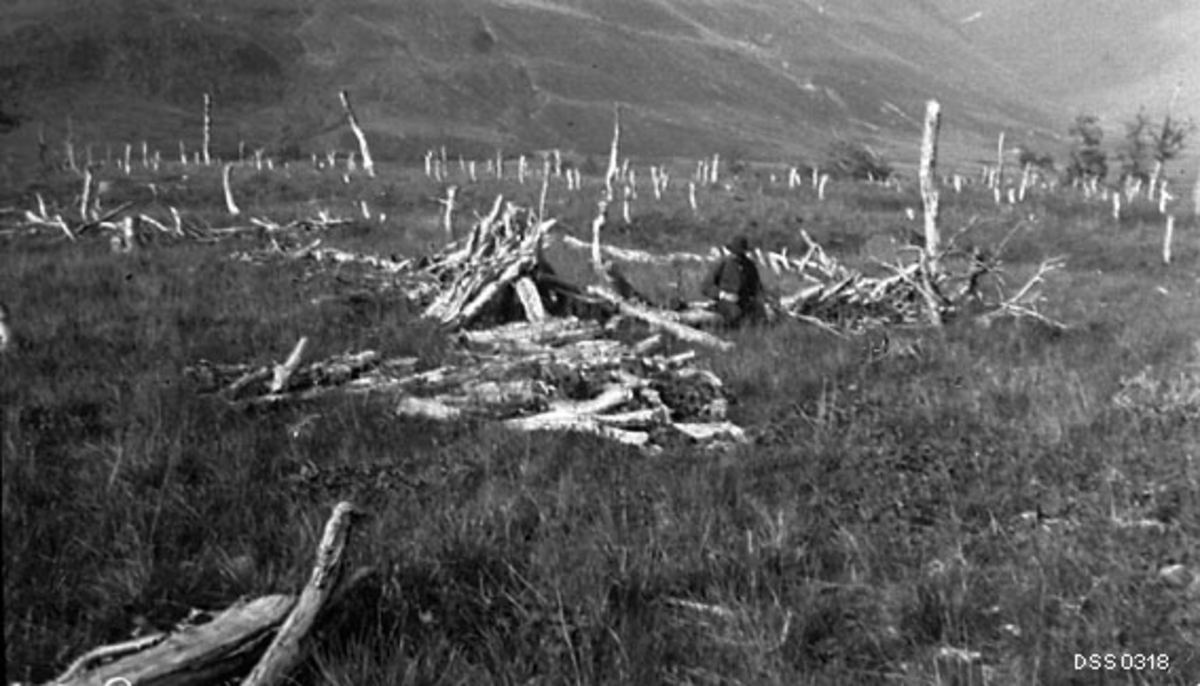 Gras- og vierbevokst sletteareal i Svensborgdalen i Balsfjord i Troms.  Fotografiet er tatt av skogplanter Hilbert Helgesen sommeren 1909, da han fikk i oppdrag å lage en rapport om eventuelle skader reinsdyrflokkene til de svenske samene som hver sommer oppholdt seg i Norge med dyra sine gjorde på skogen og skogbruket.  På det stedet der dette fotografiet er tatt fant Ruden rester av et samlingsgjerde for rein, som etter fotografiet å dømme må ha ført til at all bjørkeskogen det var overkommelig å felle med den redskapen samene disponerte var borte, uten at det var kommet nevneverdig gjenvekst av bjørk.  Slike samlingsgjerder ble brukt om lag tre sesonger før samene etablerte et nyy på et annet sted der det var tilgang på bjørkeskog.  Dette fotografiet viser et forlatt samlingsgjerde i forfall.  Ivar Ruden, som ved hjelp av sine egne og Hilbert Helgesens feltnotater og fotografier utarbeidet en rapport om de samiske reinbeitene og skoge i Troms hadde litt andre forestillinger om hvor lang tid det tok før gjerderestene var borte enn hans svenske kollega Anders Holmgren, som i 1912 publiserte en slags «moptrapport» («Studier öfver nordligaste Skandinaviens björkskogar»).  Disse divergerende oppfatningene om forråtnelsestempo fikk også konsekvenser i form av ulike oppfatninger om hvor omfattende og aggressive samenes skader på bjørka i vernskogbeltet var.  Da dette fotografiet ble tatt satt en kjentmann Helgesen hadde med seg på gjerderestene.  Bakenfor ser vi en del høye bjørkestubber, noe som ble tolket som karakteristiske spor etter samiske hogster.