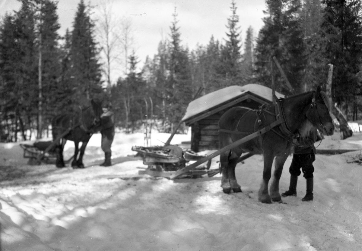 Hester med sleder