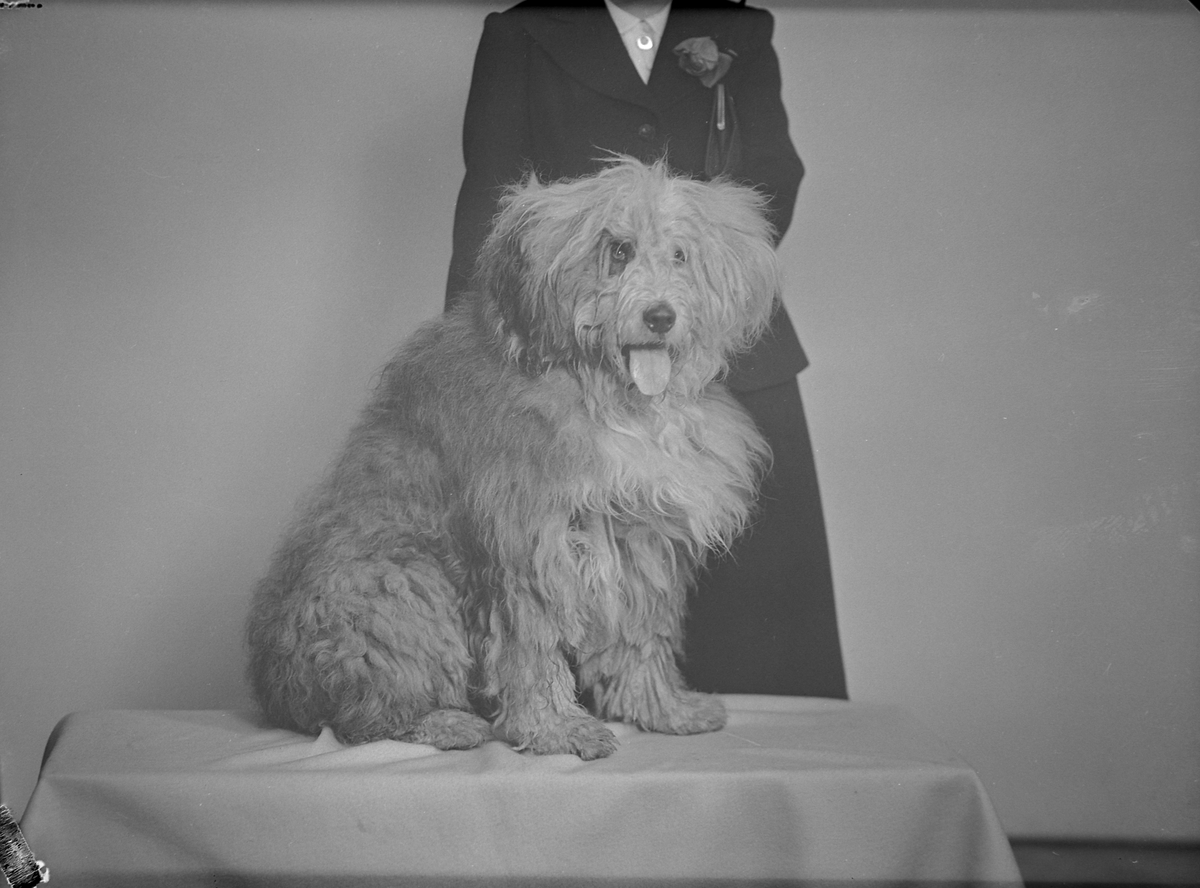 Hund fotografert for Adresseavisen