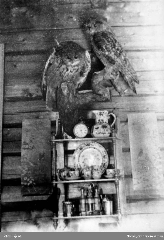 Kjøkkenhylle med to utstoppede ugler, trolig i Carl Abraham Pihls hjem