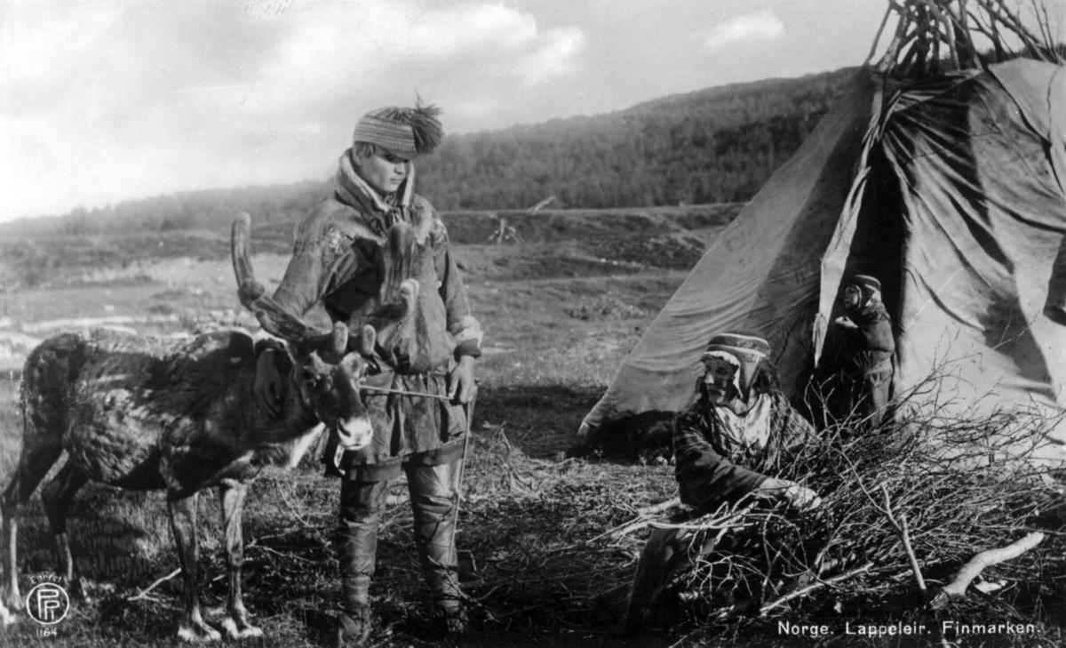 Sameleir, Finnmark. Samer foran et telt. Mannen står ved siden av et reinsdyr. Kvinnen samler sammen småkvist. Et barn står i teltåpningen.