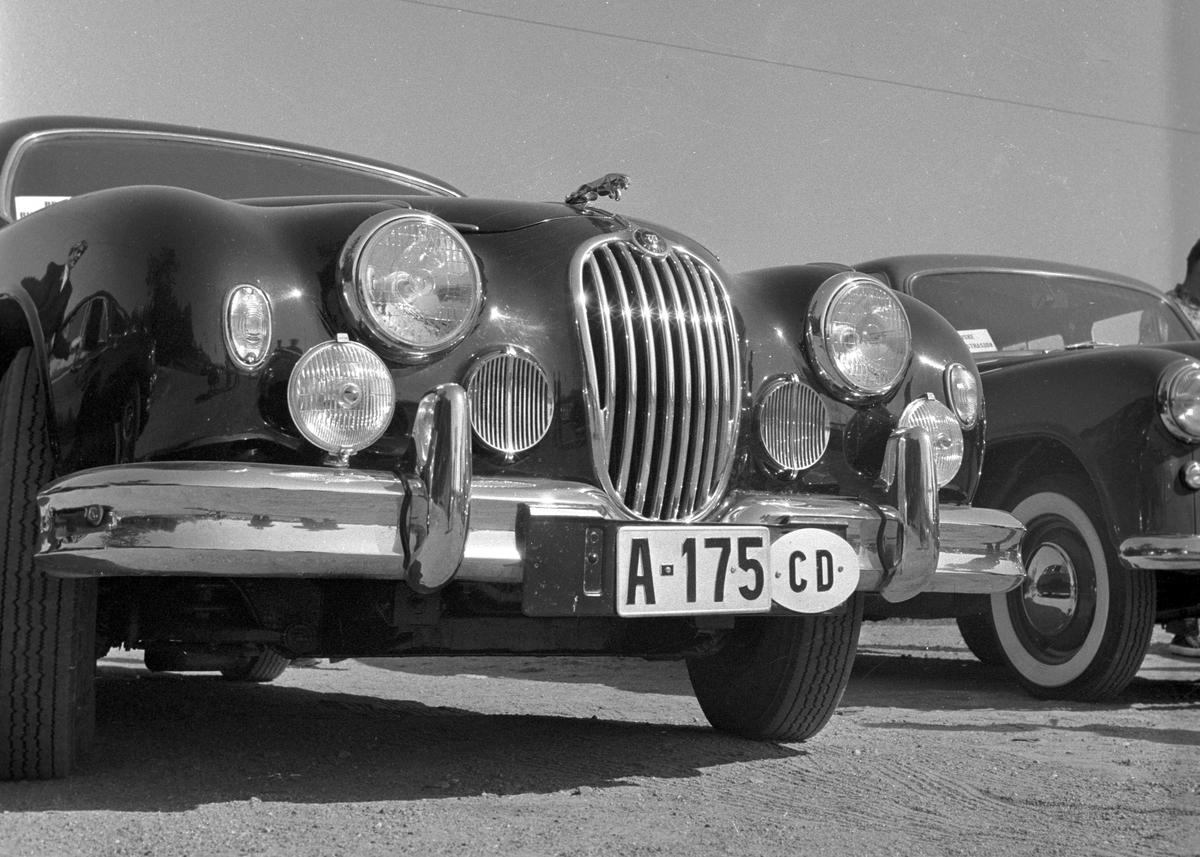 Serie. Bilutstilling av Engelske biler som Vauxhall Velox på Frognerseteren, Oslo. Fotografert 4. september 1956.
