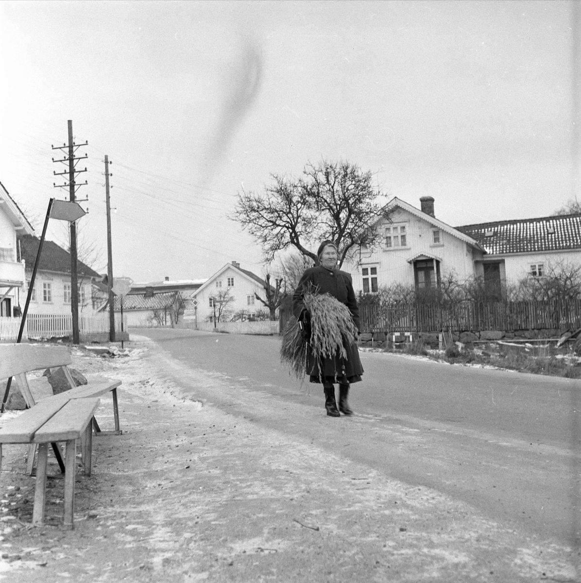 Fevik, Grimstad, desember 1957. Kvinne med kornnek på vei.
