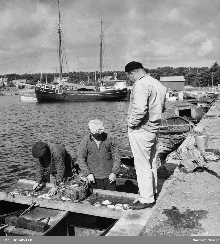 Rensning av plattfisk i fiskeläget Skäggnäs