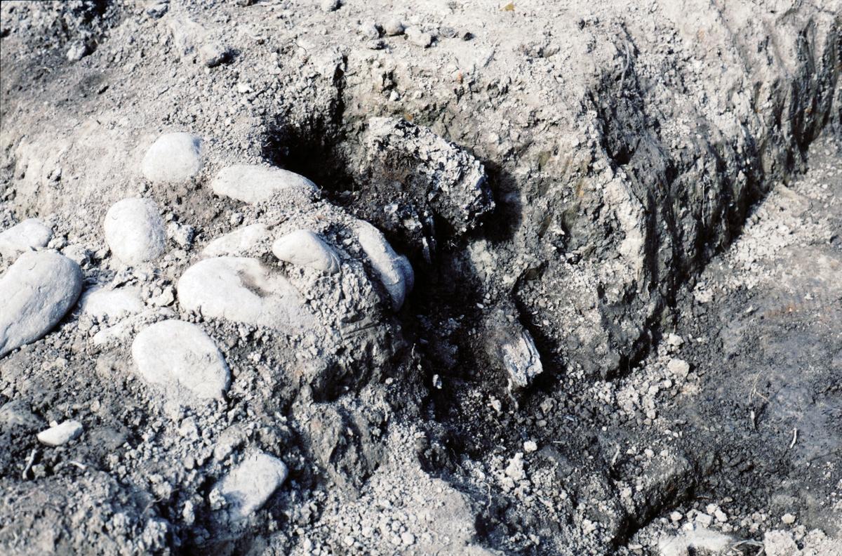 Kungsgårdsplatån, trä i stensträng - Arkeologi Gamla Uppsala 1990