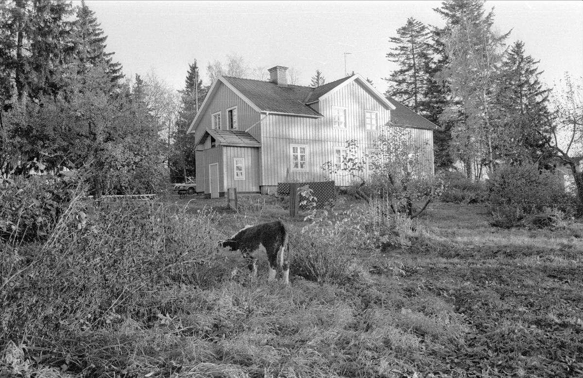Mangårdsbyggnad, Gamla Uppsala 8:50, Bredåker, Gamla Uppsala socken, Uppland 1978
