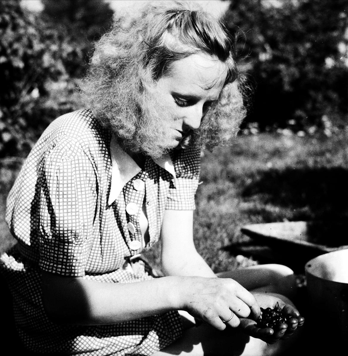 Ung kvinna rensar blåbär, Norge 1947