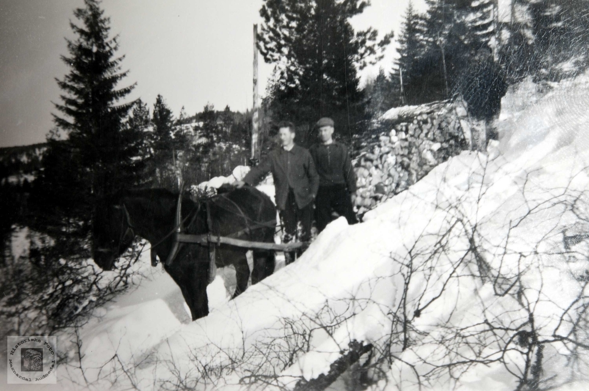 Skogsarbeid med hest, Ågedal i Bjelland, nå Audnedal.