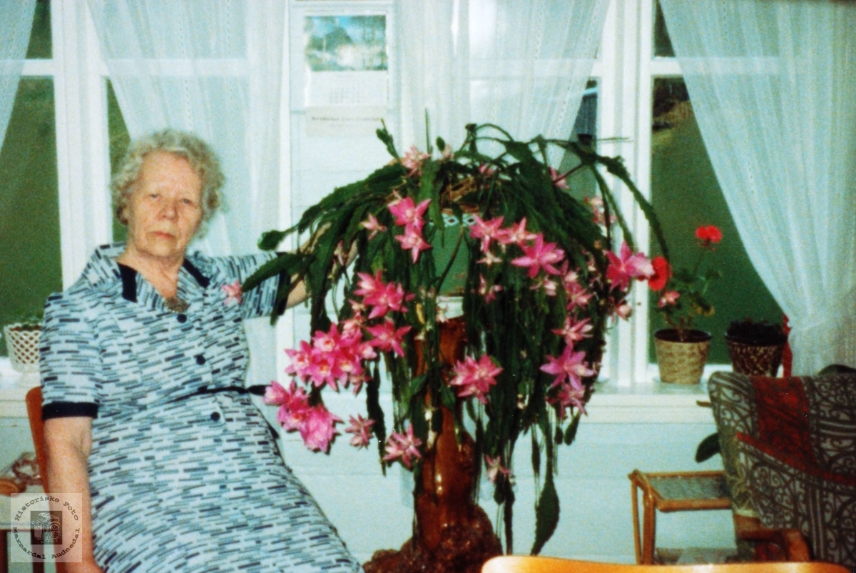 Maria Sveindal med hennar flotte kaktus. Grindheim.