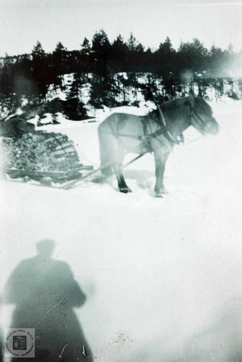 Hest med vedlass på sleden, Håland Grindheim Audnedal.