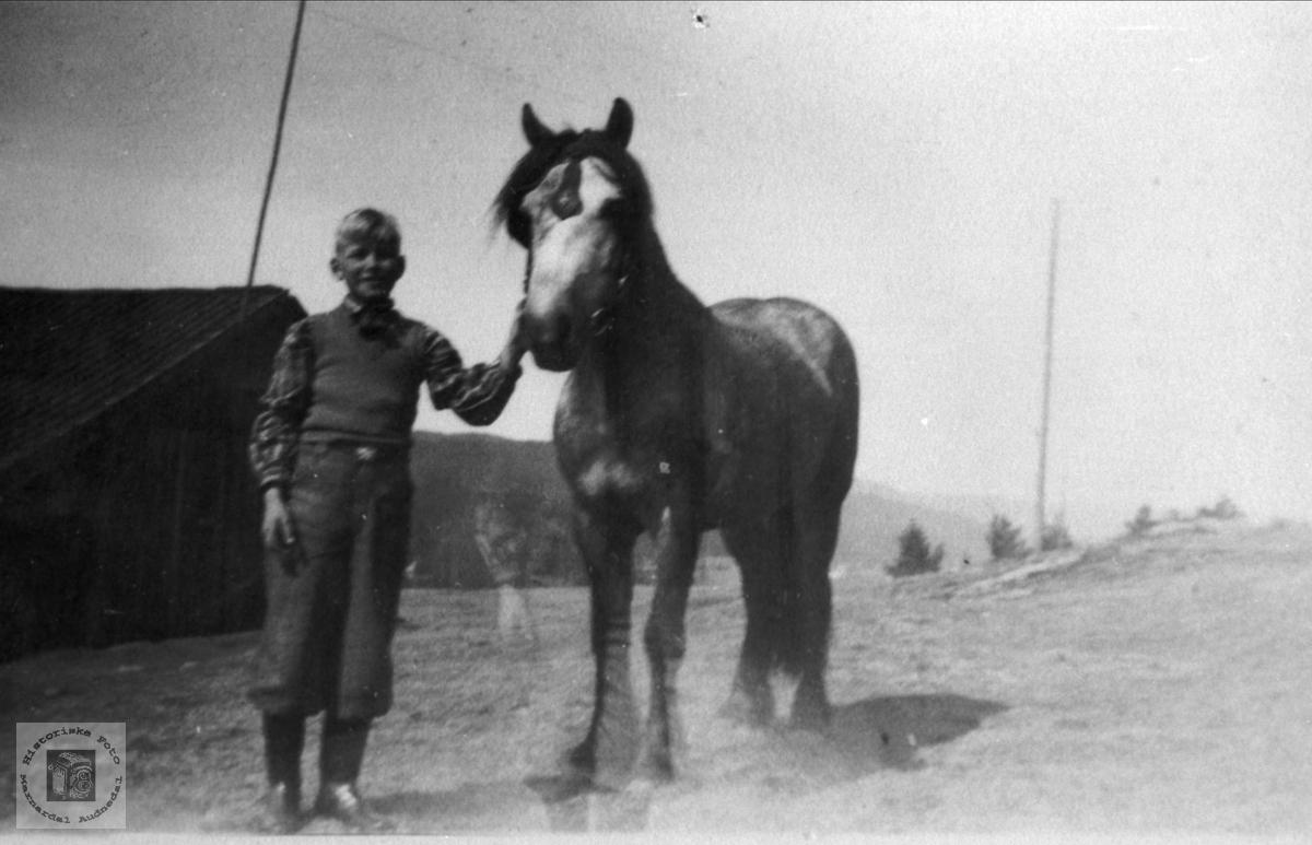 """""""Tysk"""" hest (Blåen) """"Gråen"""" er notert på baksida av bildet ."""