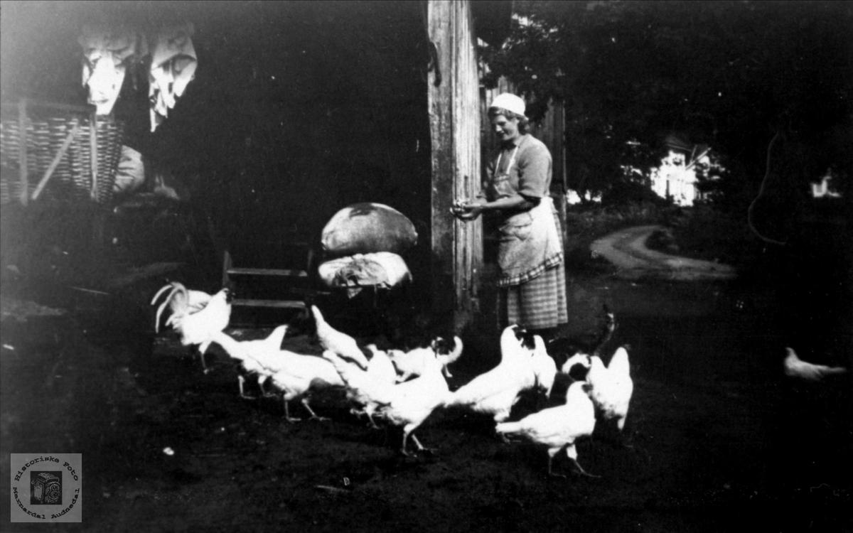 Hønseforing på Usland i Øyslebø.