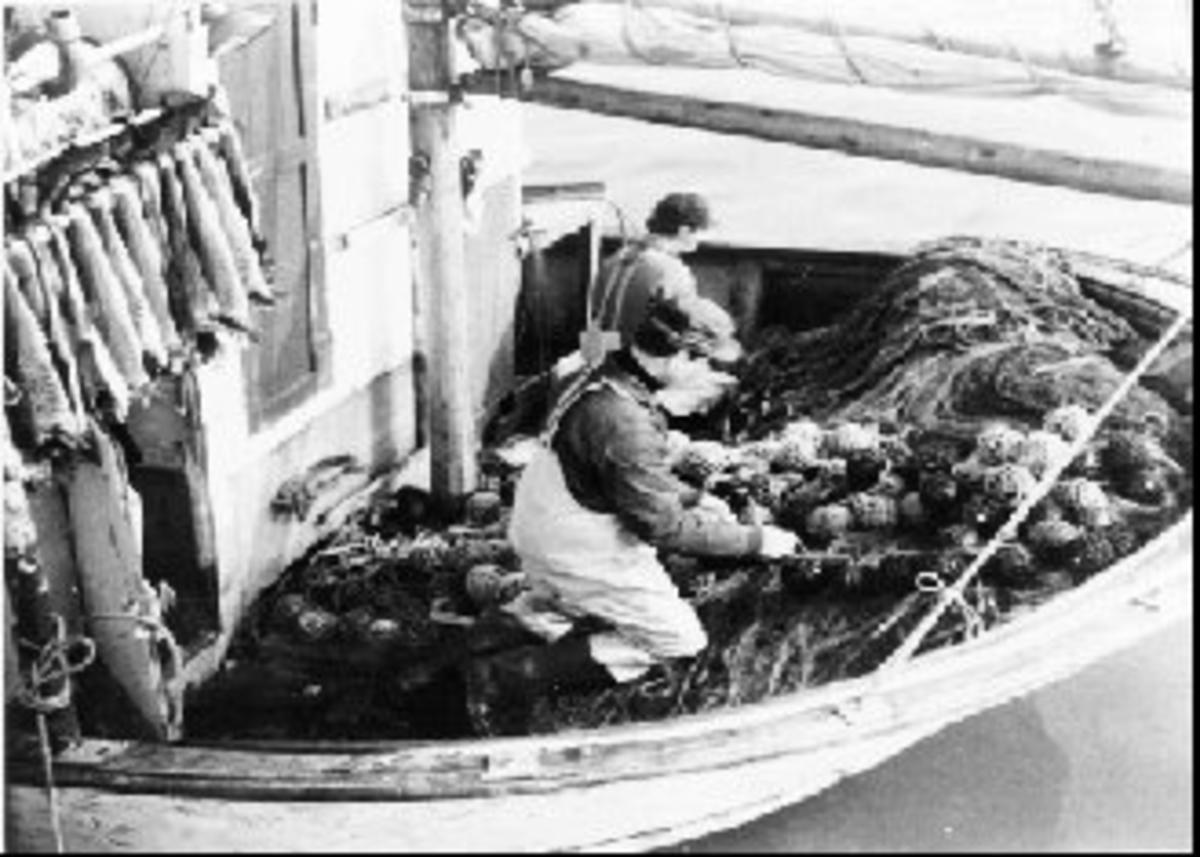 Fjordfiske