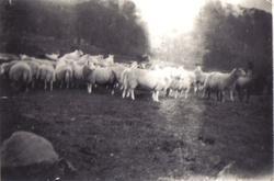Samling fotografier etter Olga Beldo f. Eliassen