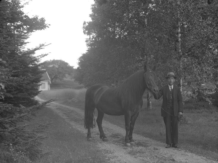 """Enligt fotografens noteringar: """"Hästen = märren stoet?."""""""